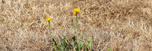 Don't mow in a drought
