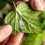 Common Lawn Pests that Cause the Most Detrimental Effects
